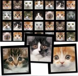 Adorable Pets - Katzen von Elizabeth´s Studio