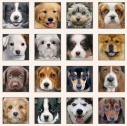 Paneel - Adorable Pets - Hunde von Elizabeth´s Studio