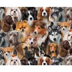 Dog Breeds - Elizabeth´s Studio Hunde