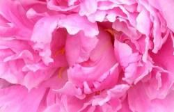 THINK PINK - von pink, fuchsia zu blutrot