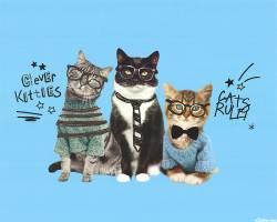 Cats Rule - Paneel Digitaldruck 85 x 110 cm - Camelot