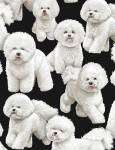 Bichon Frise- Malteser- Hunde Timeless Treasures schwarzer Hintergrund