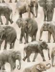 WILD Elephant - Timeless Treasures