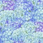 Hydrangea Birdsong -  Hortensien - Henry Glass