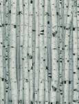 Timeless Treasures BIRCH WOOD NATURE  Birkenstämme grau - weiss