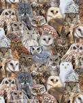 Eulen - Packed Realistic Owls by  Timeless Treasures
