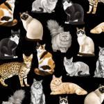 Black Feline Fancy Cats - Timeless Treasures