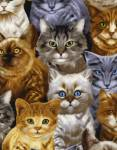 Cute Packed Kitties - Timeless Treasures