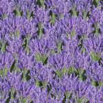 MINIBALLEN 0,60 m Lavendel Timeless Treasures