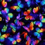 Butterfly Magic - große Schmetterlinge - Timeless Treasures