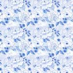 Blue Jubilee - Cabbage Rosen - blaue Rosen auf Weiss